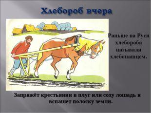 Запряжёт крестьянин в плуг или соху лошадь и вспашет полоску земли. Раньше на