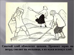 Сжатый хлеб обмолотят цепами. Провеют зерно на ветру, смелют на мельнице, а и