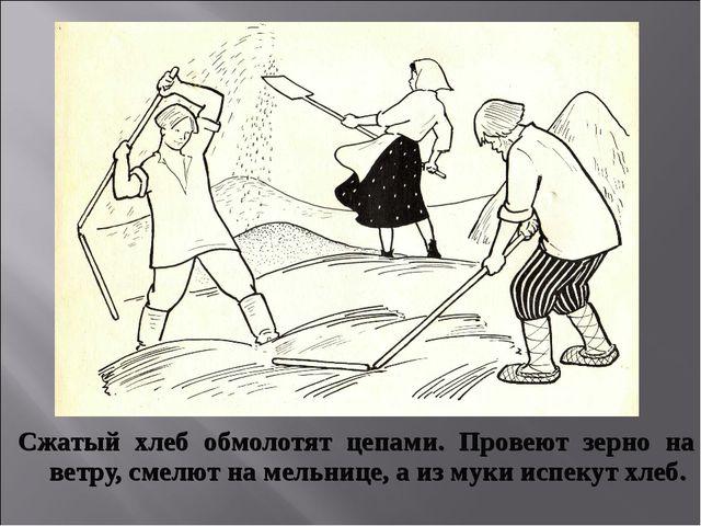 Сжатый хлеб обмолотят цепами. Провеют зерно на ветру, смелют на мельнице, а и...