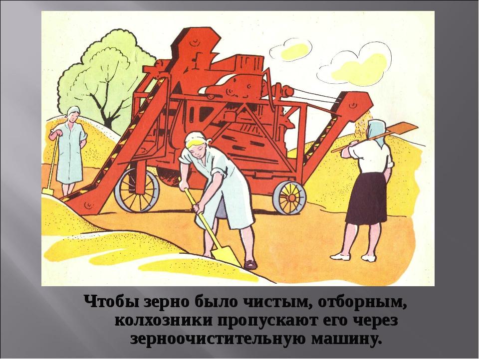 Чтобы зерно было чистым, отборным, колхозники пропускают его через зерноочист...