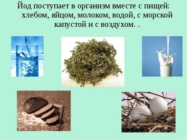 Йод поступает в организм вместе с пищей: хлебом, яйцом, молоком, водой, с мор...
