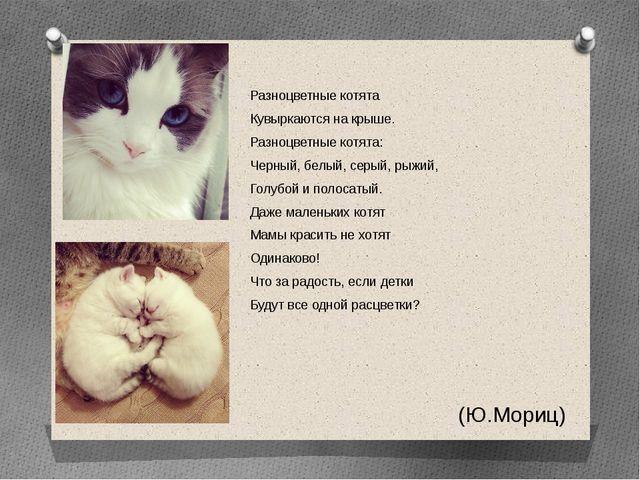 Разноцветные котята Кувыркаются на крыше. Разноцветные котята: Черный, белый...