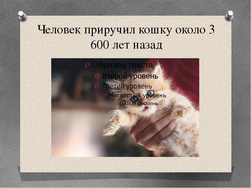 Человек приручил кошку около 3 600 лет назад