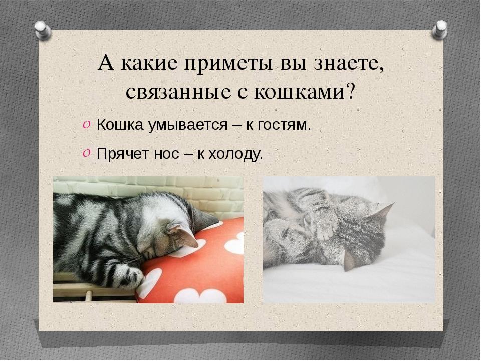 А какие приметы вы знаете, связанные с кошками? Кошка умывается – к гостям. П...