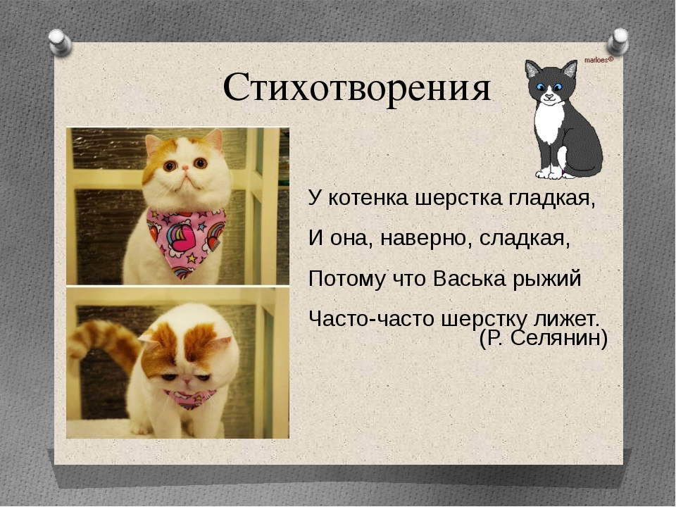 Стихотворения У котенка шерстка гладкая, И она, наверно, сладкая, Потому что...