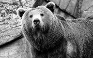 https://im0-tub-ru.yandex.net/i?id=5af8ea020b0e073ef0fe5ef8cc640fea&n=22