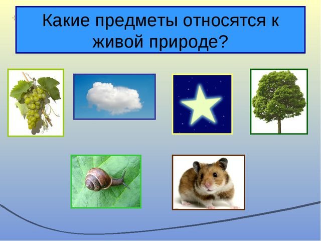 Какие предметы относятся к живой природе?