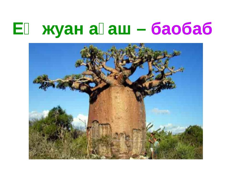 Ең жуан ағаш – баобаб