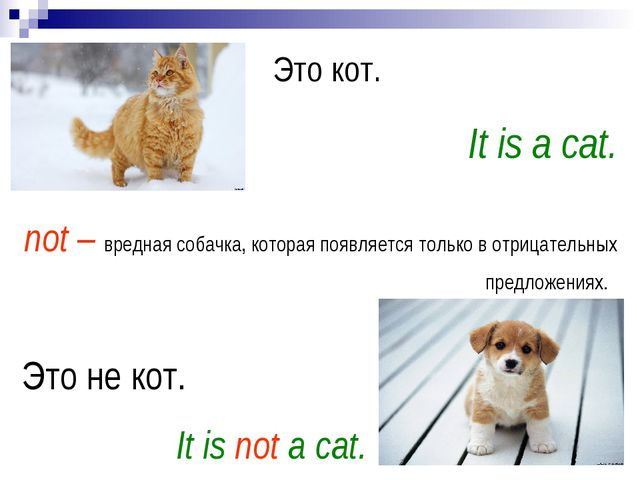 Это кот. It is a cat. Это не кот. It is not a cat. not – вредная собачка, кот...