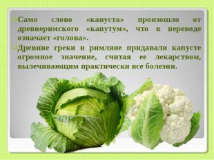 Само слово «капуста» произошло от древнеримского «капутум», что в переводе оз