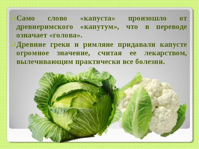 Само слово «капуста» произошло от древнеримского «капутум», что в переводе оз...