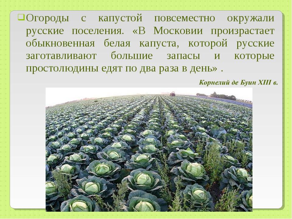 Огороды с капустой повсеместно окружали русские поселения. «В Московии произр...