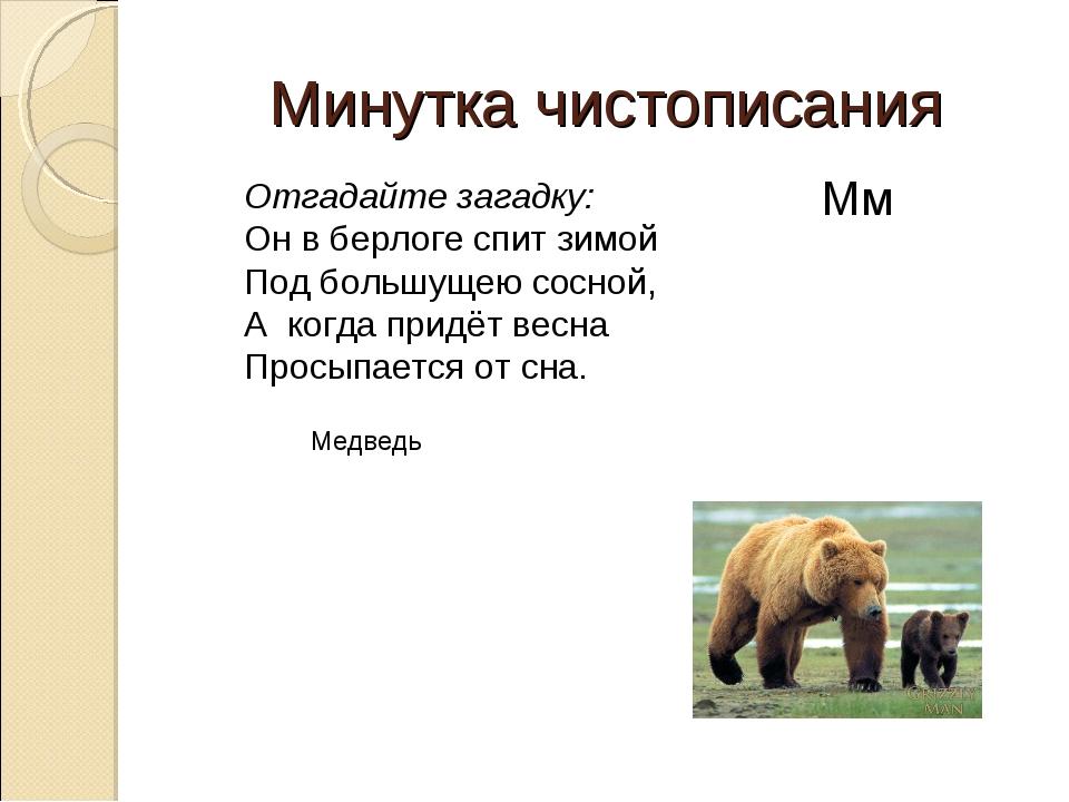 Минутка чистописания Медведь Отгадайте загадку: Он в берлоге спит зимой Под б...