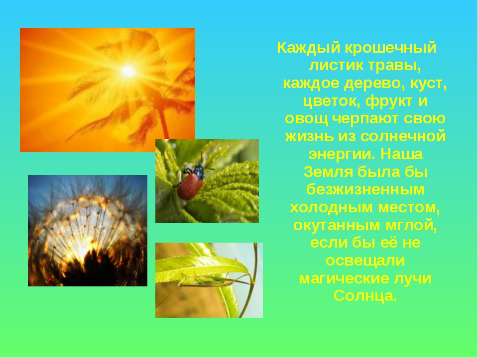 Каждый крошечный листик травы, каждое дерево, куст, цветок, фрукт и овощ черп...