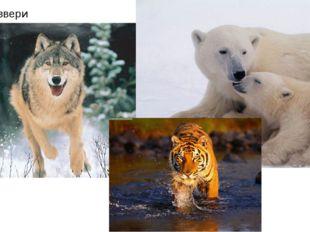 Хищные звери