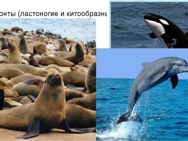 Гидробионты (ластоногие и китообразные)