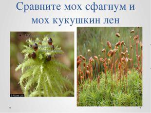 Сравните мох сфагнум и мох кукушкин лен