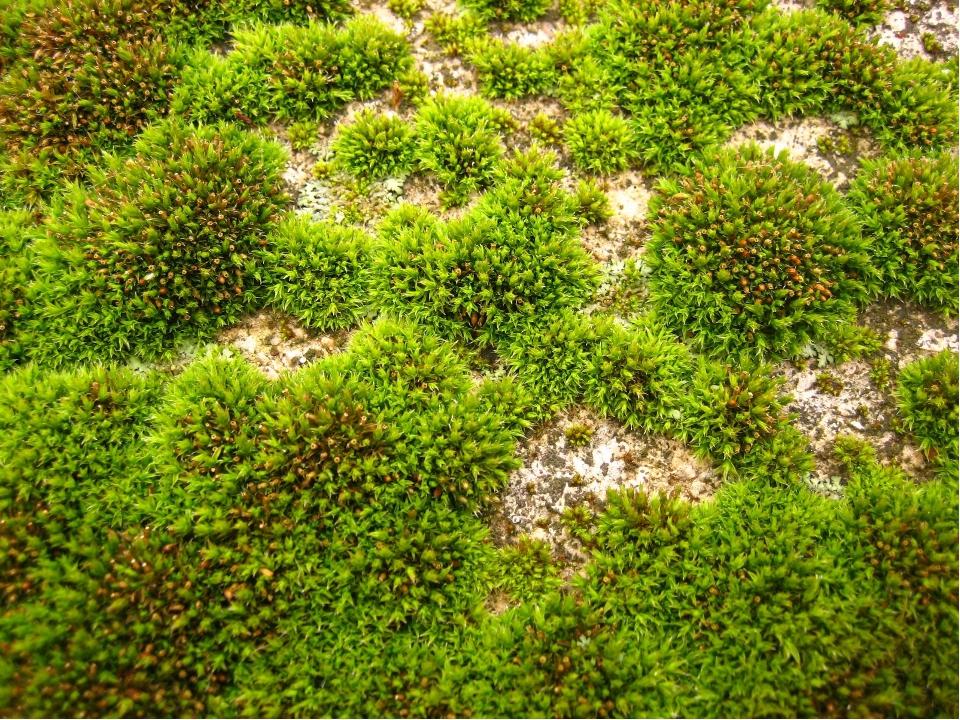 Мягок, а не пух, зелен, а не трава