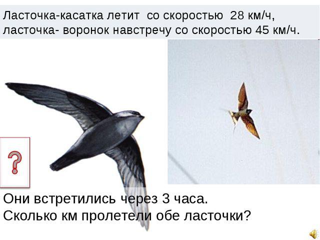 Ласточка-касатка летит со скоростью 28 км/ч, ласточка- воронок навстречу со с...