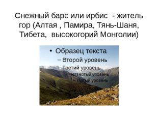 Снежный барс или ирбис - житель гор (Алтая , Памира, Тянь-Шаня, Тибета, высок