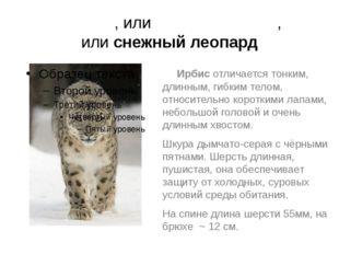 И́рбис, илисне́жный барс, илиснежный леопард Ирбис отличается тонким, длинн