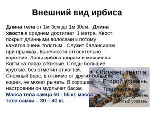Внешний вид ирбиса Длина тела от 1м 3см до 1м 30см. Длина хвоста в среднем до