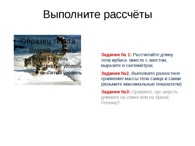 Выполните рассчёты Задание № 1: Рассчитайте длину тела ирбиса вместе с хвосто...