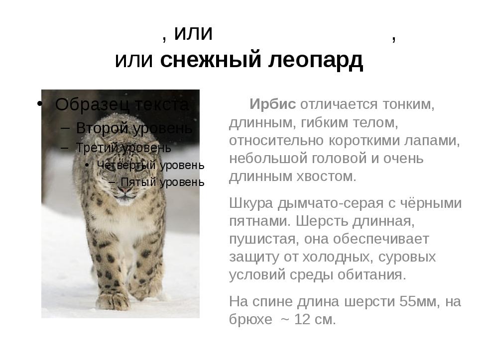 И́рбис, илисне́жный барс, илиснежный леопард Ирбис отличается тонким, длинн...