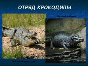 ОТРЯД КРОКОДИЛЫ Нильский крокодил Черный кайман