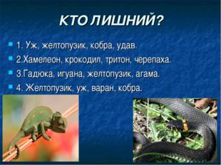 КТО ЛИШНИЙ? 1. Уж, желтопузик, кобра, удав. 2.Хамелеон, крокодил, тритон, чер