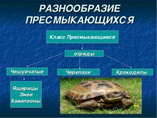 РАЗНООБРАЗИЕ ПРЕСМЫКАЮЩИХСЯ Класс Пресмыкающиеся отряды Чешуйчатые Черепахи К