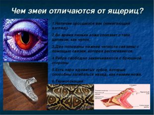 Чем змеи отличаются от ящериц? 1.Наличие сросшихся век (немигающий взгляд). 2