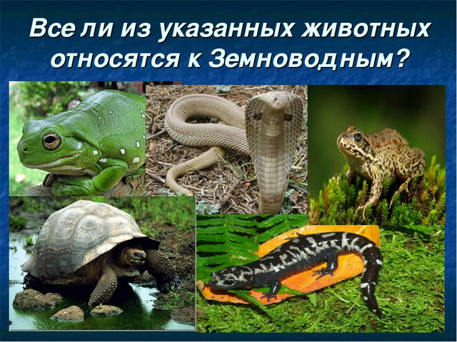 Все ли из указанных животных относятся к Земноводным?