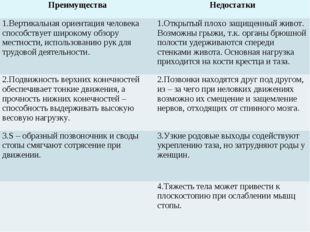 ПреимуществаНедостатки 1.Вертикальная ориентация человека способствует широк