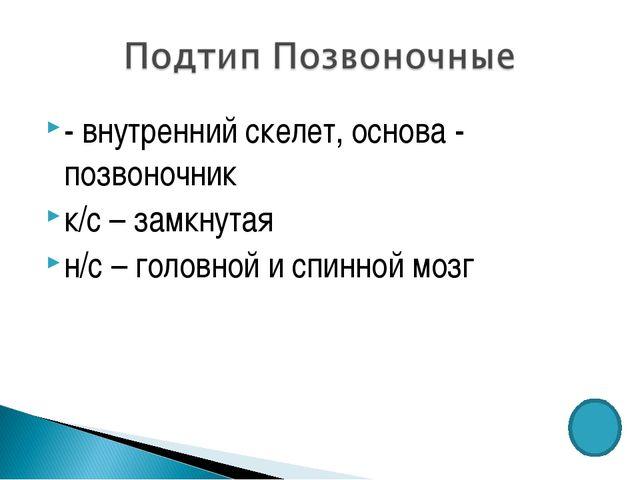 - внутренний скелет, основа - позвоночник к/с – замкнутая н/с – головной и сп...
