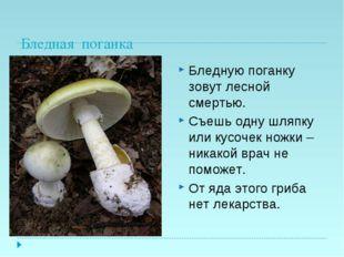 Бледная поганка Бледную поганку зовут лесной смертью. Съешь одну шляпку или к