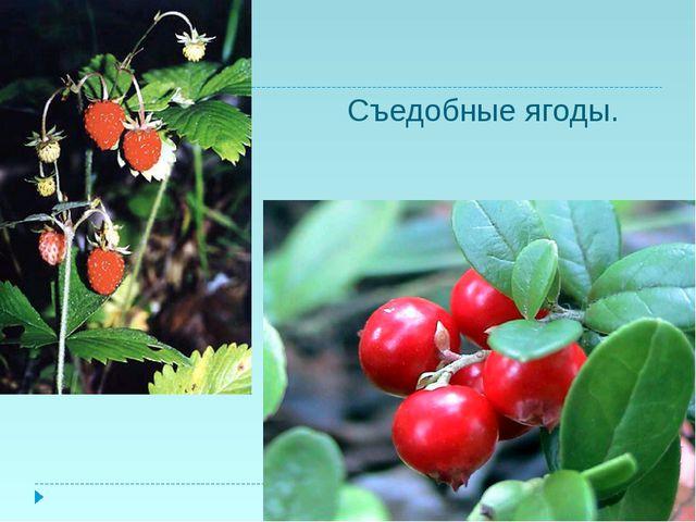 Съедобные ягоды.