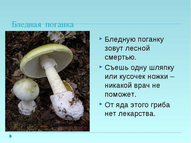 Бледная поганка Бледную поганку зовут лесной смертью. Съешь одну шляпку или к...