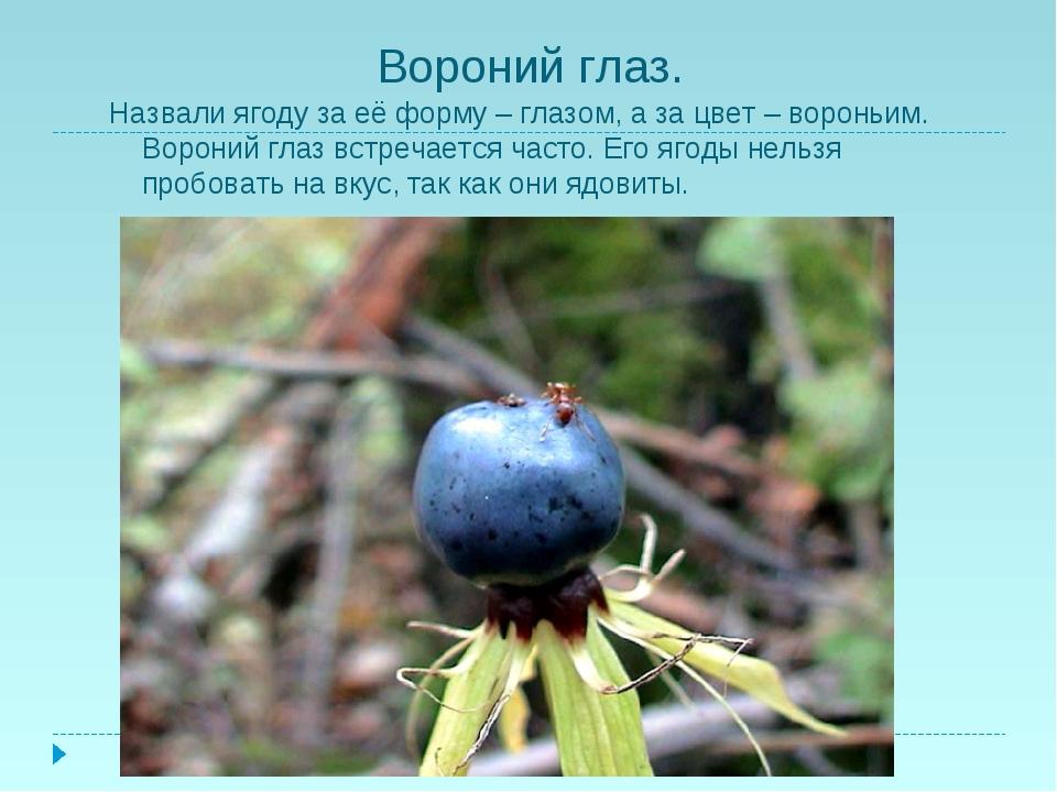 Вороний глаз. Назвали ягоду за её форму – глазом, а за цвет – вороньим. Ворон...