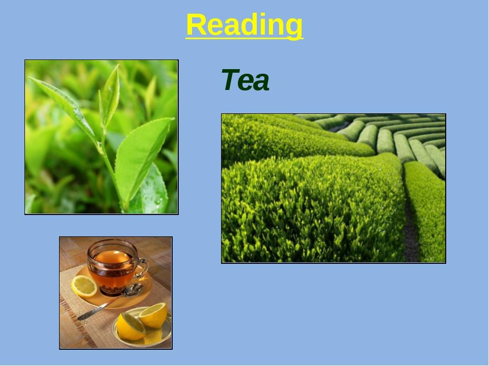 Reading Tea