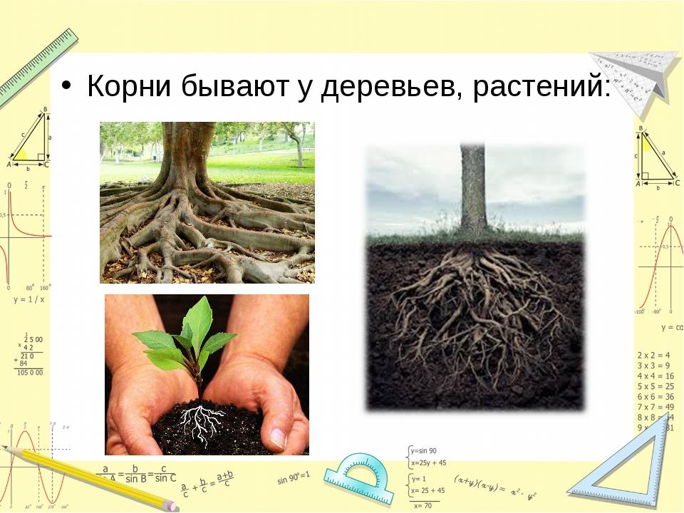 Корни бывают у деревьев, растений: