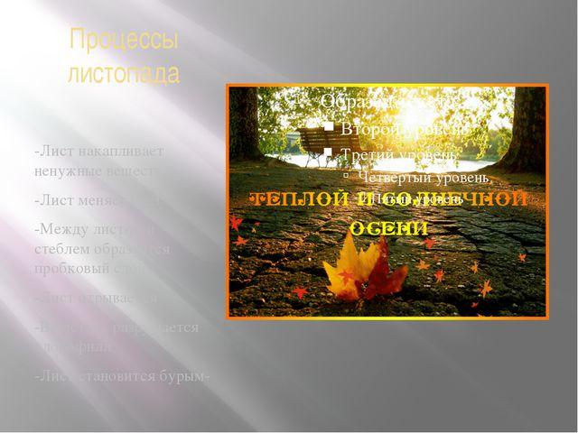 Процессы листопада -Лист накапливает ненужные вещества -Лист меняет цвет -Меж...