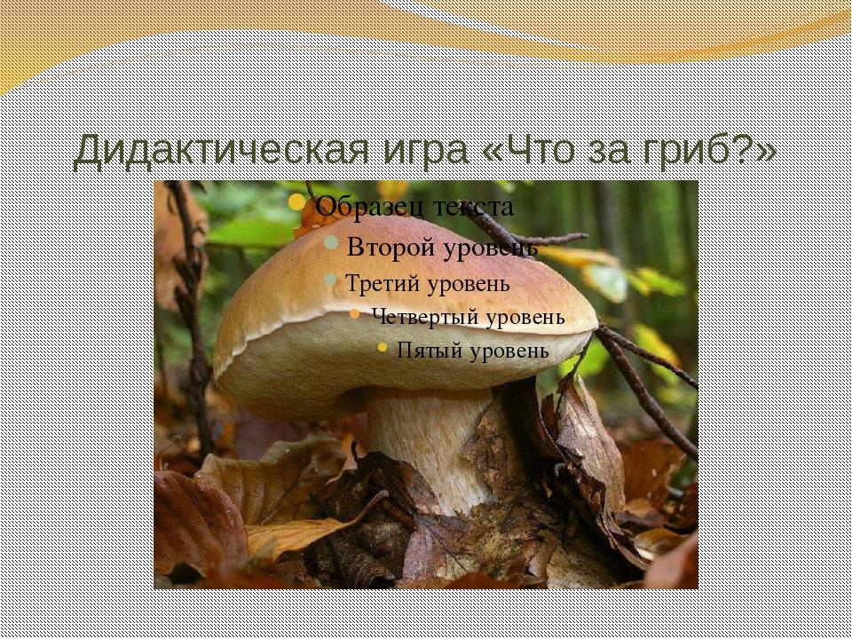 Дидактическая игра «Что за гриб?»