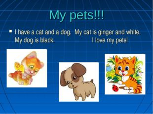 My pets!!! I have a cat and a dog. My cat is ginger and white. My dog is blac