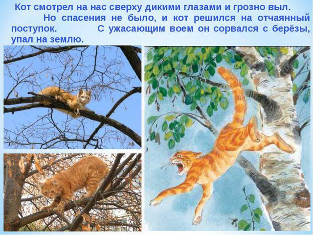 Кот смотрел на нас сверху дикими глазами и грозно выл. Но спасения не было,...