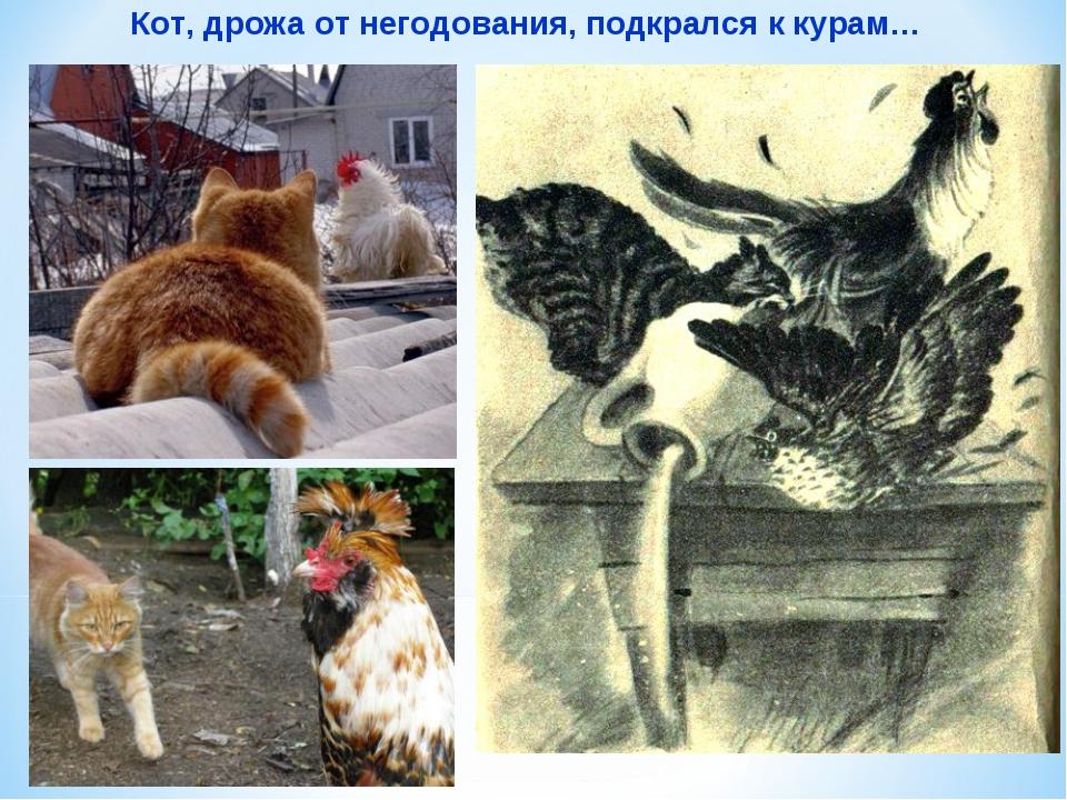 Кот, дрожа от негодования, подкрался к курам…