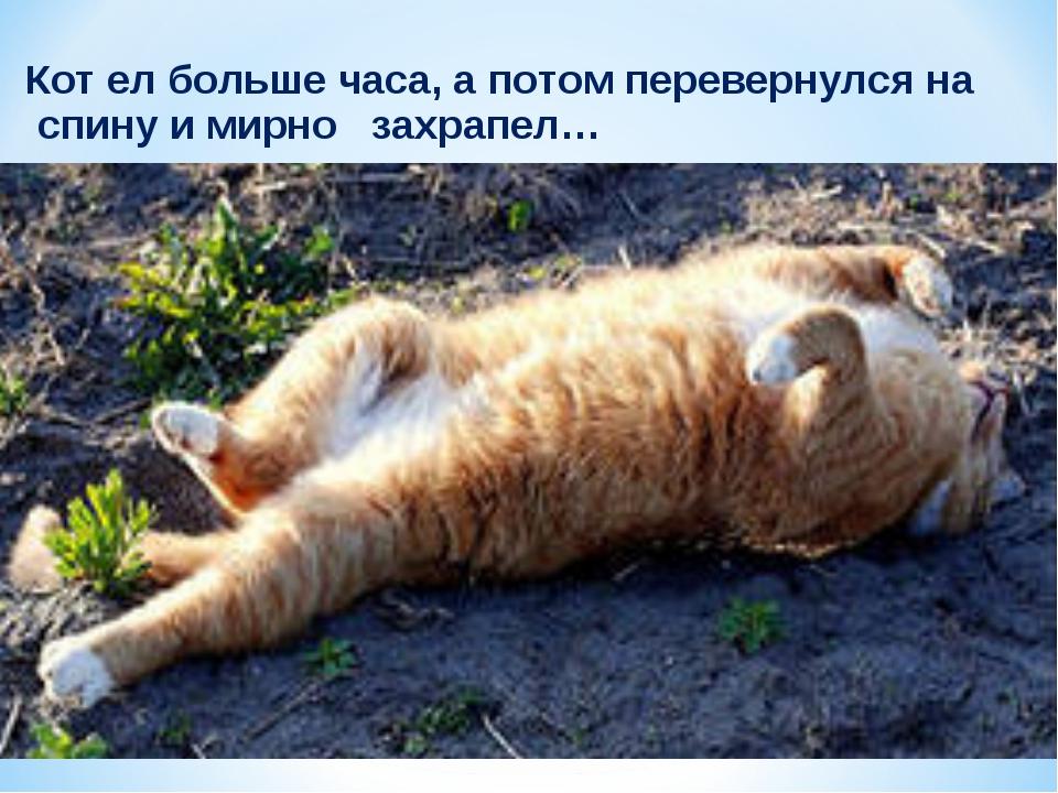Кот ел больше часа, а потом перевернулся на спину и мирно захрапел…