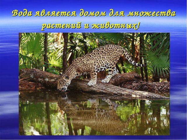 Вода является домом для множества растений и животных!