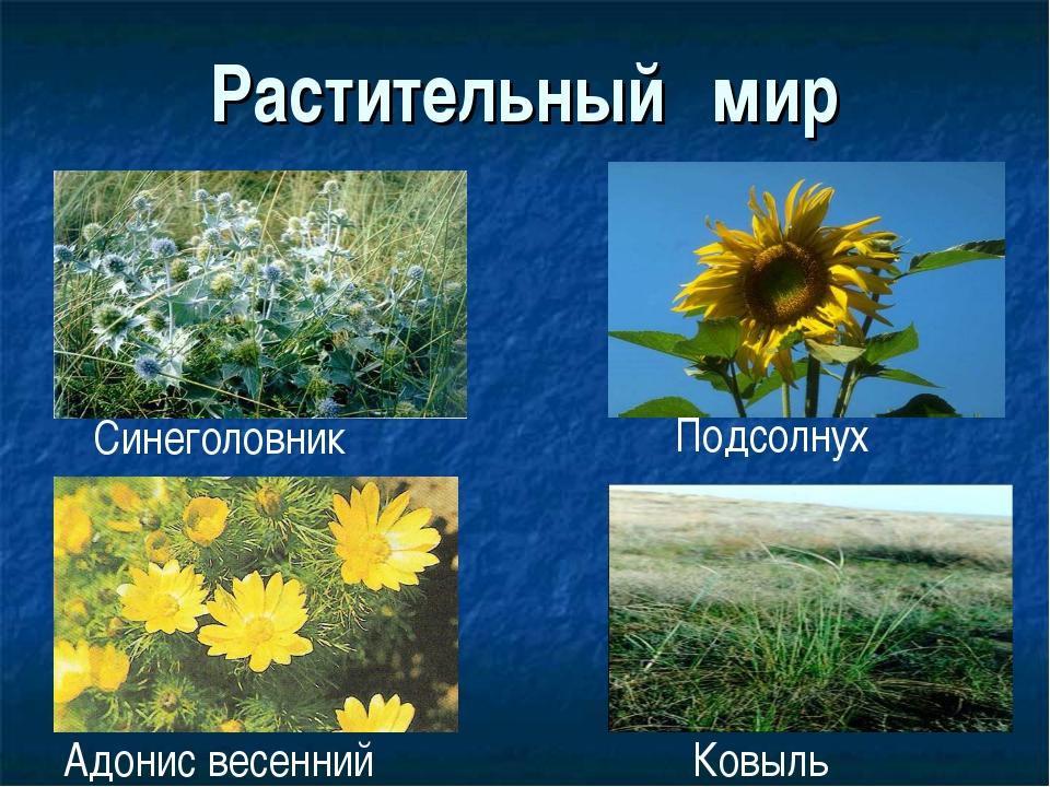 Растительный мир Синеголовник Подсолнух Ковыль Адонис весенний