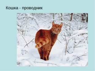 Кошка - проводник